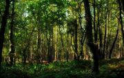 Pescado forest 2
