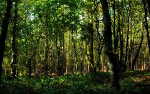 File:Pescado forest 2.jpg