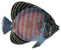 FishSailfinTang