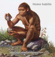 Homo-habilis-3