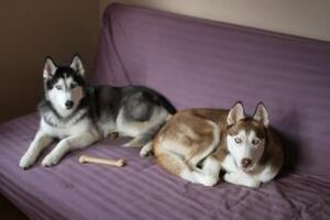 Mishka and laika with toy