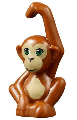 File:Orangutan.jpeg