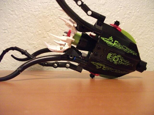 File:Squid 3.jpg