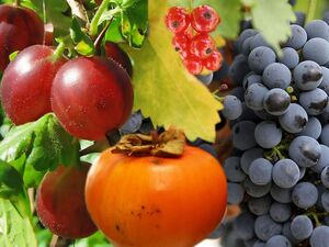 True.berries