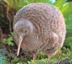 File:Kiwi.jpg