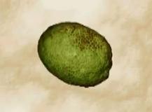 File:Breadfruit.png