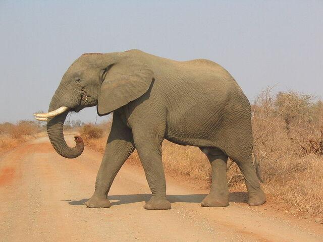 File:Elephant.jpg
