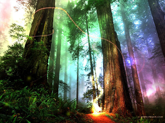 File:Magical-forest 1024x786.jpg