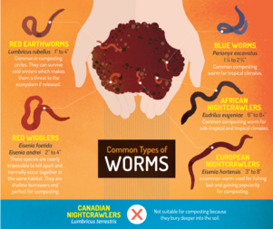 Common-types-of-worms