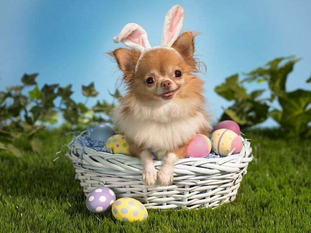 File:Bunny wishes you a happy easter-normal.jpg