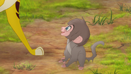 Baboons (89)