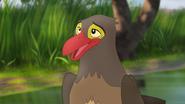 Ono-the-tickbird (359)