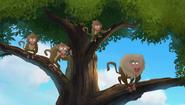 Baboons (149)