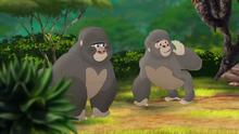 The-lost-gorillas (221)