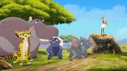 Follow-that-hippo (69)