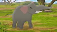 Follow-that-hippo (7)