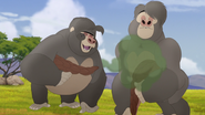 The-lost-gorillas (60)