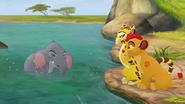 Follow-that-hippo (89)