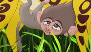 Baboons (339)