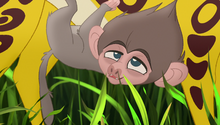 Baboons (339)