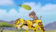 Baboons (143)