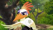 Ono-the-tickbird (504)