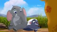 Follow-that-hippo (152)
