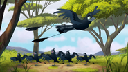The-call-of-the-drongo-hd (176)