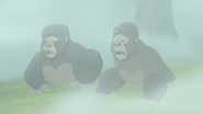 The-lost-gorillas (264)