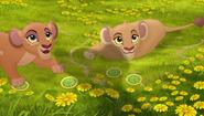 Baboons (271)