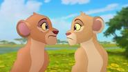 Baboons (164)