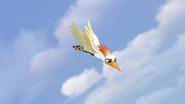 Ono-the-tickbird (378)