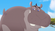 Follow-that-hippo (184)