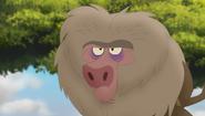 Baboons (152)