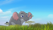 Follow-that-hippo (228)