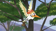 Ono-the-tickbird (190)