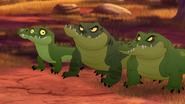 Let-sleeping-crocs-lie (340)