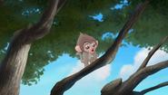 Baboons (214)