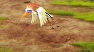 Ono-the-tickbird (182)