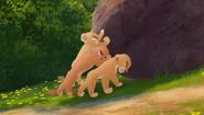 Baboons (299)