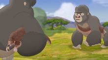 The-lost-gorillas (46)