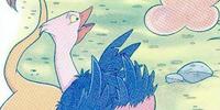 Spike (ostrich)/Gallery