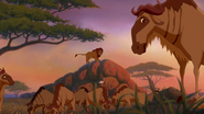 Lion-king2-disneyscreencaps com-1904