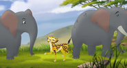 Elephanttrot
