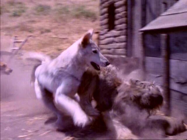 File:The Wolves 15.JPG