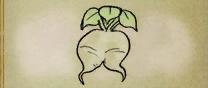 Rash Turnip