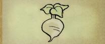 Regular Turnip