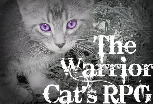 File:Blue Eyed Kitten.jpg