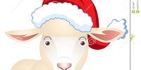 Stu sheep