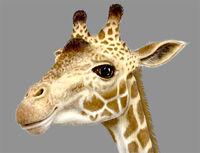 Toys-r-us-giraffe